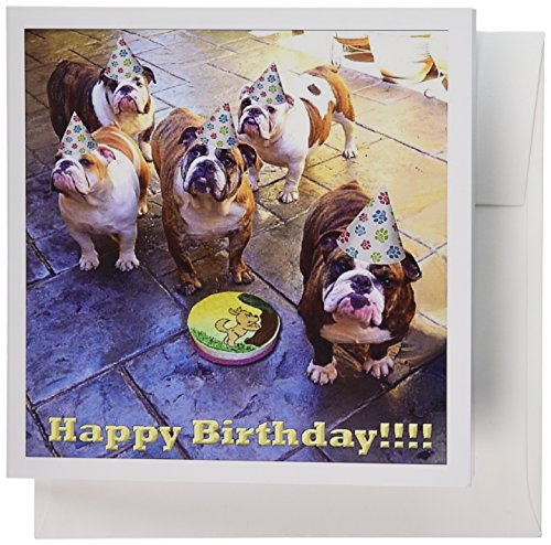 Birthday Bulldog (3dRose English Bulldog Birthday - Greeting Cards, 6 x 6 inches, set of 6 (gc_39567_1))