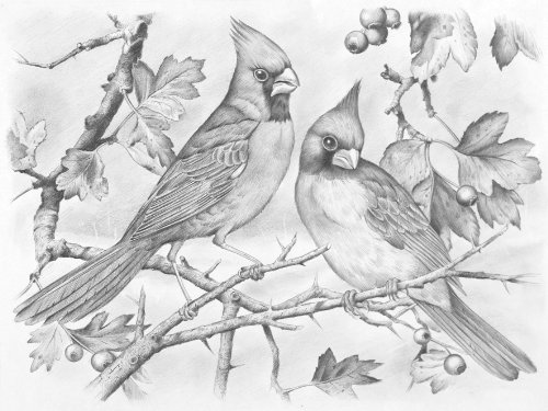 Reeves Sketching by Number Kit 13 Inch X16 Inch -Red Cardinal