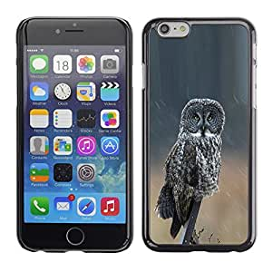 Plastic Shell Protective Case Cover    Apple iPhone 6 Plus 5.5    Ornithology Wings Nature Summer @XPTECH