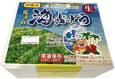 海ぶどう 100g入り 沖縄名産の海藻 プチプチ食感がたまりません。酢の物、納豆に混ぜる、サラダ等に。◇お得な配送設定あり(2箱まで同梱可能)