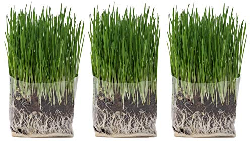 Compostable Cat Grass Grow Bag Kit, 3 Pack, All Organic, Just add Water. Made in The USA from The Cat Ladies