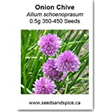 Onion Chive (Allium schoenoprasum) 0.5g 350-450 Seeds. 5g, 10g, 25g (0.5g (350-450 Seeds))