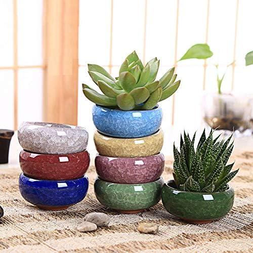 8 macetas de cerámica para plantas jugosas y bonsáis pequeñas, decoración para el hogar y el jardín, macetas de plantas suculentas pequeñas, 6, 35 cm: Amazon.es: Jardín