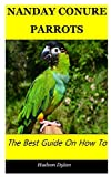 NANDAY CONURE PARROTS: The Best Guide On How To