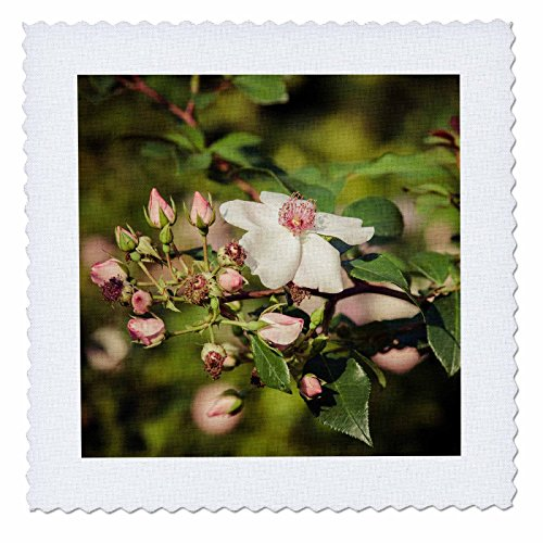 Rosa Duvet Cover - 3dRose Alexis Photography - Flowers Rose - Briar flower and buds, vintage colors - 6x6 inch quilt square (qs_267227_2)