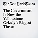 The Government Is Now the Yellowstone Grizzly's Biggest Threat | Thomas McNamee