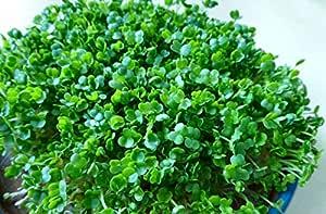 SONIRY Semillas Paquete no Plantas: - Semillas: Las Semillas ...