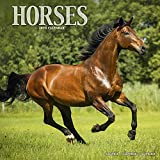 Horse Calendar - Calendars 2019 - 2020 Wall Calendars - Animal Calendar - Horses 16 Month Wall Calendar by Avonside (Multilingual Edition)