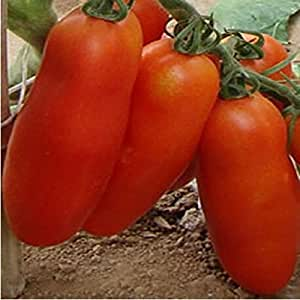 HITSAN 200Pcs Bunches of Bananas Tomato Seeds Organic Vegetable Bonsai Seeds One Piece