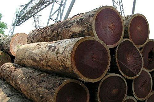 African Padauk Wood Lumber Stunning Thick Kiln Dried Exotic Bowl Blanks Lathe Lumber 6 x 6 x 4 Kendama USA