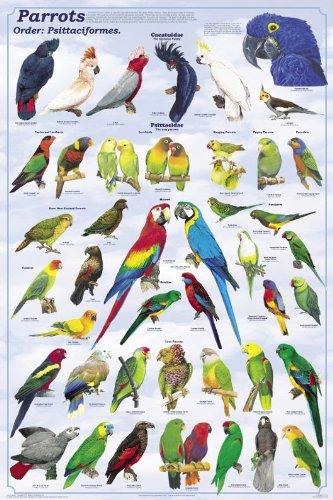 Senegal Parrot - 6