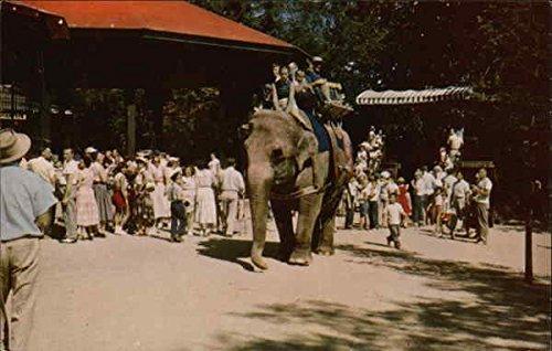 Benson Wild Animal Farm Hudson, New Hampshire Original Vintage Postcard from CardCow Vintage Postcards