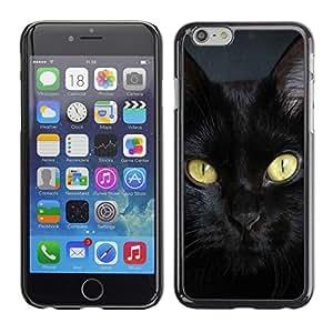 TopCaseStore / la caja del caucho duro de la cubierta de protección de la piel - Bombay Cat Breed Chartreux Black - Apple iPhone 6 Plus 5.5