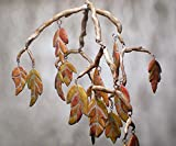 Autumn Leaf - Hanging Mobile - Kinetic Mobile - Wind chime - Mobile Wall Hanging - Mosaic Tile