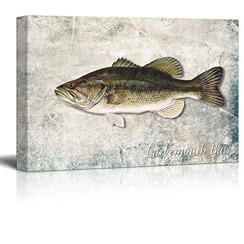 Textured Fish (wall26 Green Largemouth Bass Fish Illustration on a Textured Background - Canvas Art Home Decor - 12x18 inches)