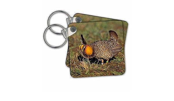 Amazon 3drose Danita Delimont Birds Greater Prairie Chicken