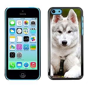 TopCaseStore / la caja del caucho duro de la cubierta de protección de la piel - Siberian Husky Malamute White Puppy Dog - Apple iPhone 5C