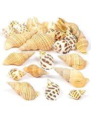 Baker Ross- Juego de Conchas de moluscos (Pack de 200 g) Que los niños y Adultos Pueden Usar para Decorar Manualidades y diseños de temática Marina - Suministros Naturales para Manualidades