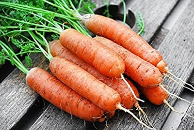 200+ ORGANICALLY GROWN Little Fingers Baby Sweet Carrot Seeds Heirloom NON-GMO, Super Sweet, Crisp and Juicy, From USA