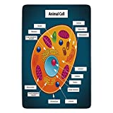 Bathroom Bath Rug Kitchen Floor Mat Carpet,Educational,Science at School Cell of an Animal Colorful Display Medical Studies Nucleus Decorative,Multicolor,Flannel Microfiber Non-slip Soft Absorbent