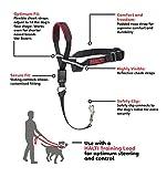 HALTI Training OptiFit Headcollar, Large, Black/Red