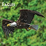Eagles 2019 12 x 12 Inch Monthly Square Wall Calendar, American Wildlife Endangered Species Birds (Multilingual Edition)