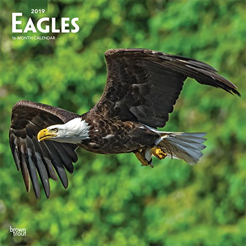 Eagles 2019 12 x 12 Inch Monthly Square Wall Calendar, American Wildlife Endangered Species Birds (Multilingual Edition) by BrownTrout Publishers