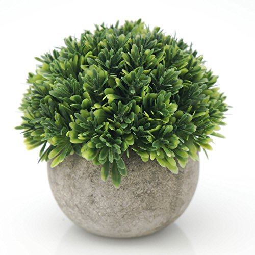 grass pots - 6