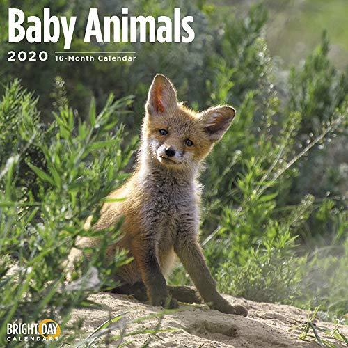 2020 Baby Animals Wall Calendar