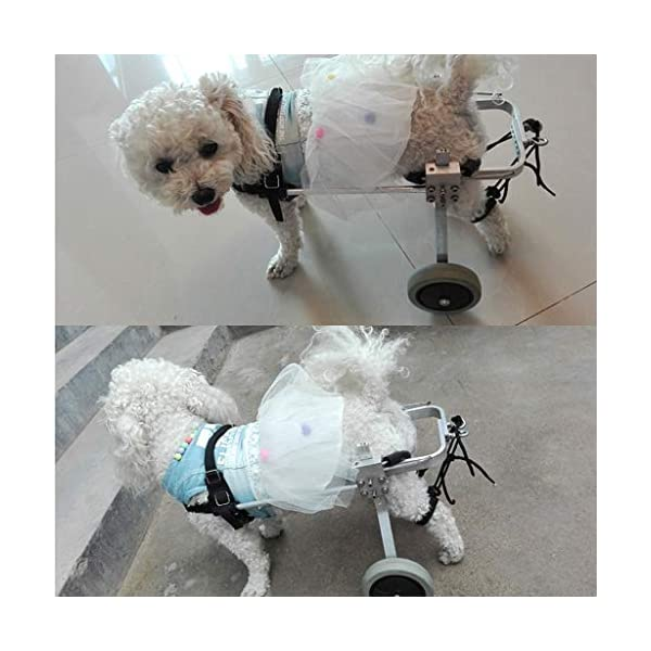 2-Wheel Pet Dog Wheelchair Fully Adjustable Rear Wheelchairs for Handicapped Hind Legs Dogs – 3 Size (Size : M) Click on image for further info. 6