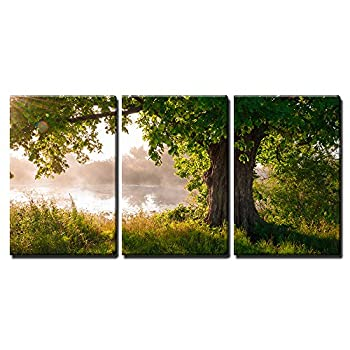 c4347415153 ... wall26 - 3 Piece Canvas Wall Art - Oak Tree in Full Leaf in Summer  Standing ...