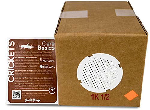 """1/2"""" Banded Crickets (1000 Count)"""