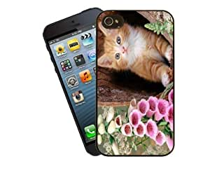 Eclipse Gift Ideas Cat Phone Case, Design 5 - Gorgeous Ginger And White Kitten - For Apple iPhone 4 / 4s - Cover