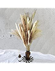 Totalt 60 st – 15 st vita pampas och 15 st bruna pampas och 30 st vassgräs/naturligt torkat pampasgräs för blomsterarrangemang heminredning