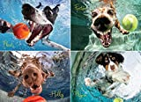 Willow Creek Press - Underwater Dogs Photo Series Play Ball - Seth Casteel - 1000 Piece Jigsaw Puzzle
