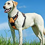 No Pull Dog Harness with Front Clip,Walking Pet Harness with 2 Metal Ring and Handle,Reflective Oxford Padded Soft Vest For Small Medium Large Breed (Orange, L)