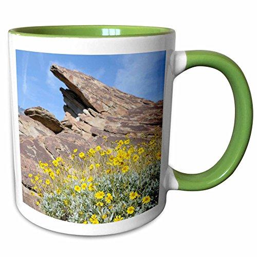 3dRose Danita Delimont - Flowers - USA, California, Palm Springs, Indian Canyons. Desert Marigold - 11oz Two-Tone Green Mug - Outlets Desert Springs Palm