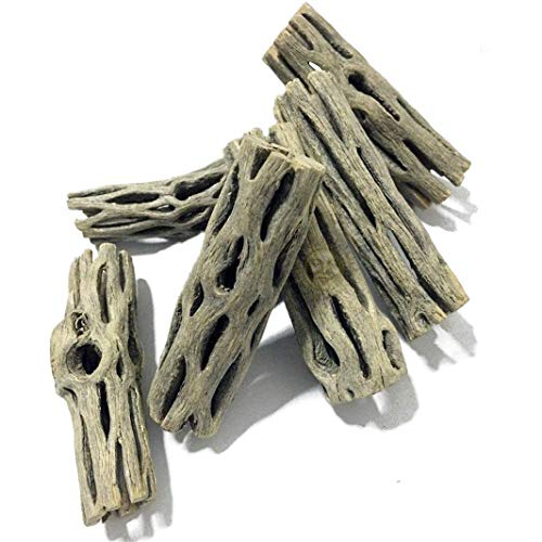 """6 Cholla Wood Pieces for Air Plants - Safe and Natural Home for your Tillandsia plants - Organic 2"""" long and 1.5"""" wide Indoor or Outdoor Garden Decoration - Low Maintenance and Fun to Customize (Fern Garden Wood)"""