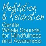 Meditation: Gentle Whale Sounds - 60 Continuous Minutes