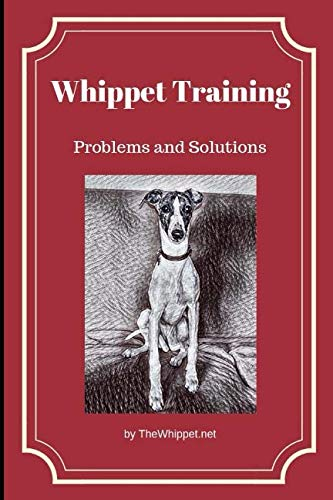 Whippet-Training-Problems-and-Solutions-TheWhippetnet