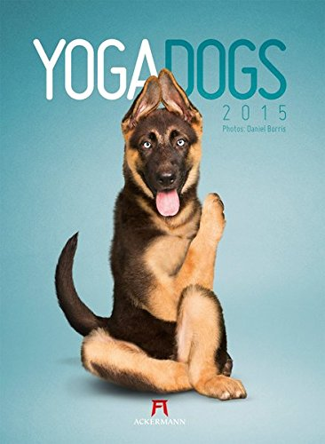 Yoga Dogs 2015