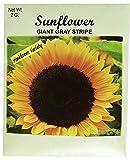 Set of 100 Flower Seed Packets! Flower Seeds in Bulk (100, Sunflower)