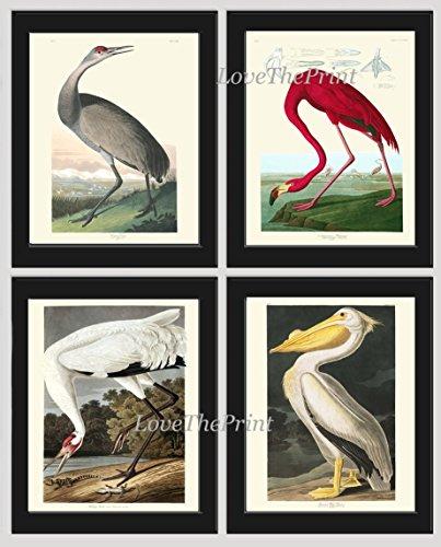 Pelican Wall (Bird Print Set of 4 Art Beautiful James Audubon Hooping Crane Pink Flamingo American Pelican Birds Illustration Home Room Decor Wall Art Unframed GJ)