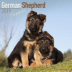 German Shepherd Puppies Calendar 2019 - Dog Breed Calendar - Wall Calendar 2018-2019