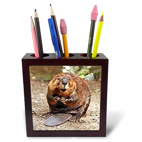 - 3dRose ph_4660_1 Beaver Tile Pen Holder, 5-Inch