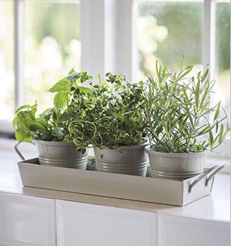 kitchen herb pots wooden planter window sill garden plant kit indoor