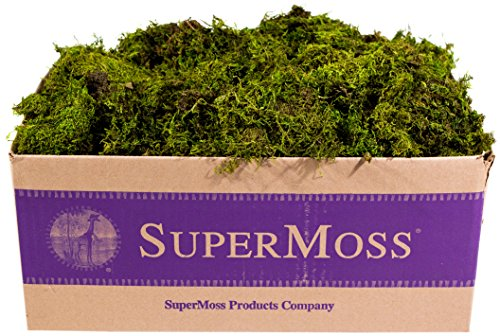 SuperMoss (22167) Sheet Moss Mini (Shredded) Preserved, Fresh Green, - Mini Moss