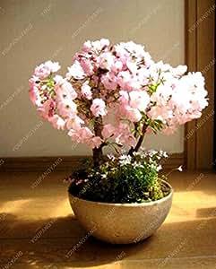 Venta caliente 20pcs / lot Semillas Sakura Japanese Bonsai Semillas Bloom Flor Planta fácil jardín de DIY envío libre del verde