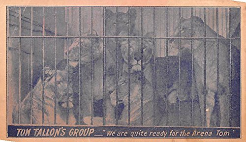 Tom Tallon's Group Animal Trainer Lion Tiger Act Postcard