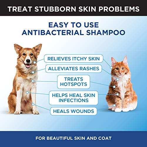 PetHonesty Antibacterial & Antifungal Chlorhexidine Shampoo 16 oz. w/Ketoconazole & Aloe for Dogs & Cats, Treats Itching, Hot Spots, Ringworm, Pyoderma & Allergies, Anti-Odor Dog Shampoo